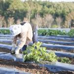 農業を仕事にしませんか?農家はどれくらい稼いでる?